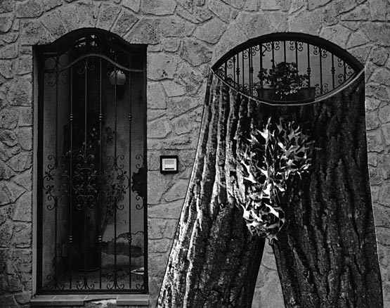 B&W gate, tree branches form legs and torso
